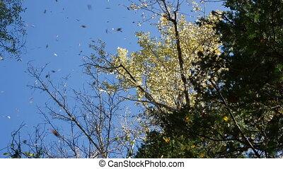Leaf fall - Falling leaves against the blue sky