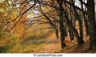 Leaf fall in autumn park - Leaf fall in the bright autumn...