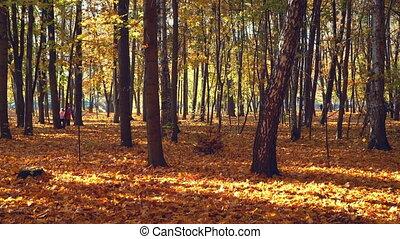 Leaf fall in autumn park - Leaf fall in the bright autumn ...