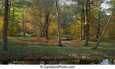 Leaf fall in Dutch park - Dutch park panorama, beautiful...