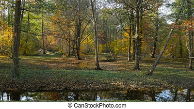 Leaf fall in Holland Park, a beautiful autumn landscape