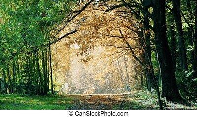 Leaf fall in oak Park in autumn HD - Leaf fall in oak Park...