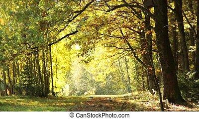 Leaf fall in oak Park in autumn HD