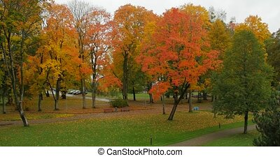 Leaf fall in the autumn city park. Beautiful background of a...