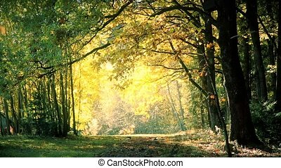 Leaf fall in the oak forest in autumn HD - Leaf fall in the...