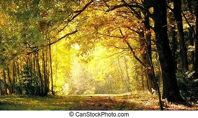 Leaf fall in the oak forest in autumn HD