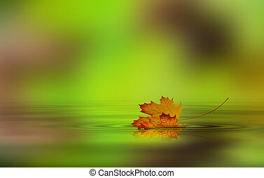 Leaf fallen from a tree in the water