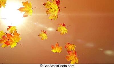 Leaf falling