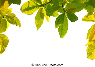 Leaf frame - Frame of backlit leaves