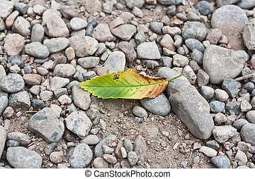 leaf from a tree on the rocks