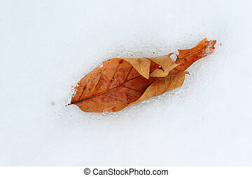 Leaf frozen in the snow