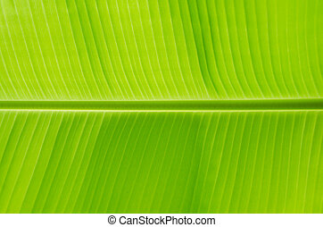 leaf., geen, banane