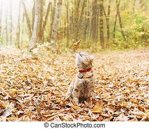 leaf., gember, een, de kat van de zitting, het vallen, het kijken, bos, herfst, droog