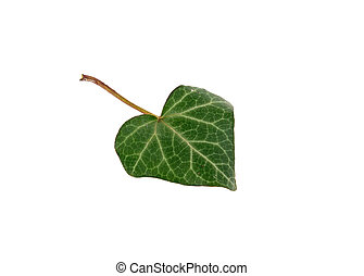 leaf green heart isolated on white background