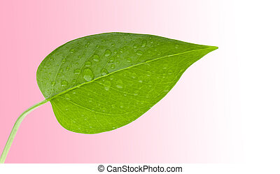 Leaf green with water drops