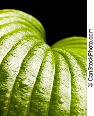 leaf., groene, nat