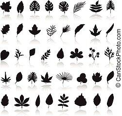 leaf icon set vector.