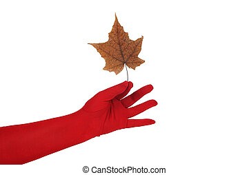 Leaf in a hand