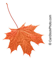 Leaf in autumn
