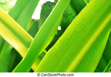 leaf in rainy