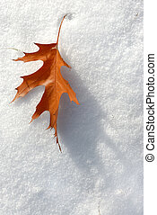 Brown leaf in November fell to an early snow.