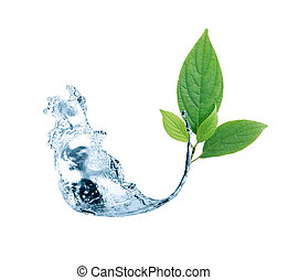 Leaf In Water Splash