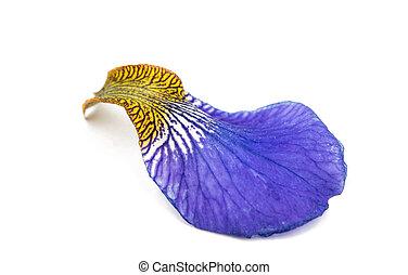 leaf iris flower