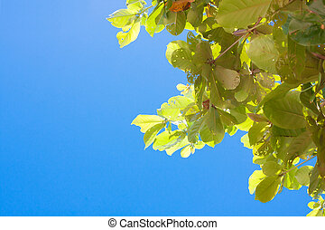 Leaf isolate
