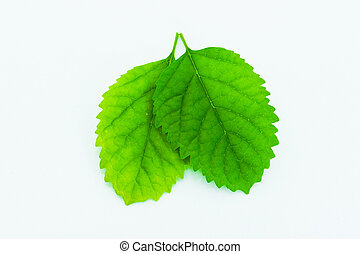 leaf isolated on white background