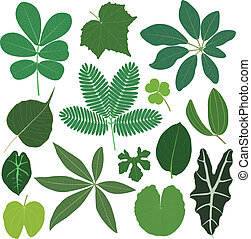 Leaf leaves plant tropical - A set of tropical leaves in...