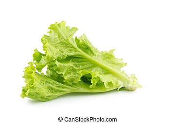 Leaf lettuce isolated on a white background