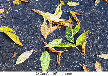 leaf litter in puddle from melting first snow