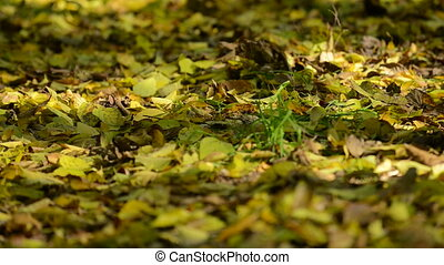 leaf litter in the woods