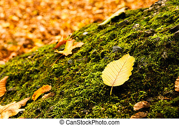 Leaf lying on a moss in autumn