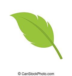 leaf natural plant sheet