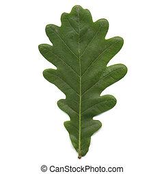 Leaf - Oak tree leaf