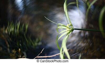 leaf of a plant closeup