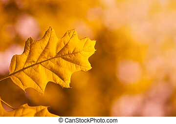 leaf of a tree in autumn
