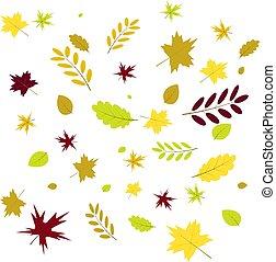 leaf of autumn leaves