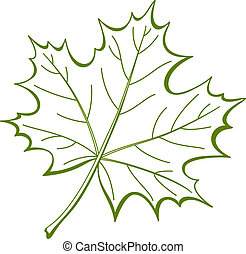 Leaf of Canadian maple, pictogram - Leaf of a maple, nature...