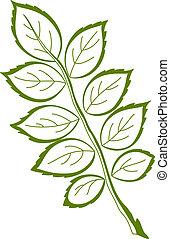 Leaf of dogrose, vector