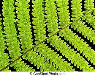 leaf of fern on black background