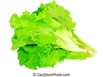 Leaf of lettuce on white background. Vector