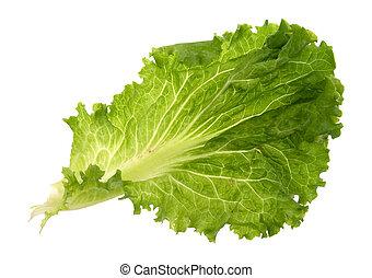 Leaf of lettuce on a white background