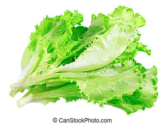 Leaf of lettuce on white background. Isolated