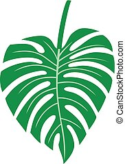 Leaf of Monstera - tropical plant vector illustration