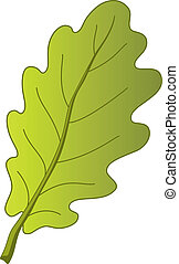 Leaf of oak tree, nature object, vector, isolated