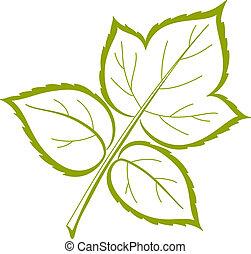 Leaf of raspberry, vector