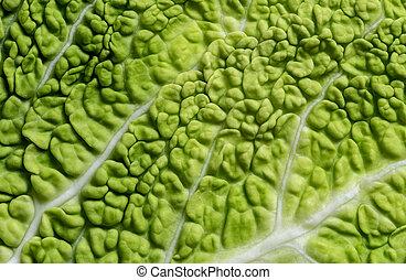 Leaf of Savoy cabbage