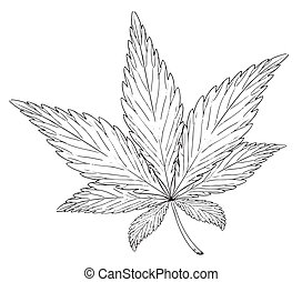 Leaf of the plant Cannabis sativa
